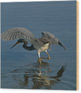 Tri Colored Heron Fishing Wood Print