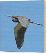 Tri-colored Heron In Flight Wood Print