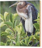 Tri-colored Heron On Guard  Wood Print