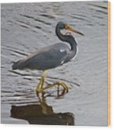Tri-colored Heron Wading In The Marsh Wood Print