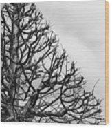 Triangle Tree Wood Print