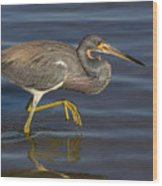 Tricolored Heron 1 Wood Print