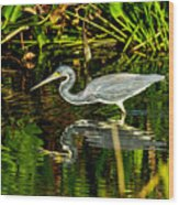 Tricolored Heron 5 Wood Print
