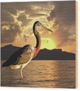 Tricolored Heron At Sunset Wood Print