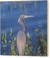 Tricolored Heron In Monet Like Setting Wood Print