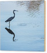 Tricolored Heron Silhouette Wood Print