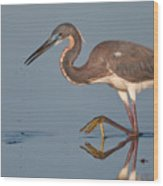 Tricolored Heron Stepping Wood Print