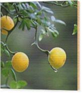 Trifoliate Orange Wood Print