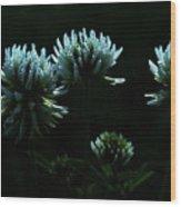 Trifolium Montanum Wood Print