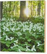 Trillions Of Trilliums Wood Print