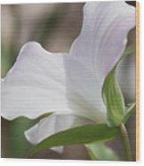 Trillium Backside Wood Print