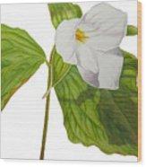 Trillium  Wood Print