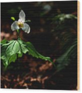 Trillium In The Woods Wood Print