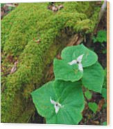 Trillium Pair By Mossy Log Wood Print