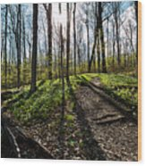 Trillium Trail Wood Print