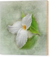 Trillium Wildflower  Wood Print