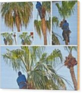 Trimming The Palm Trees Wood Print