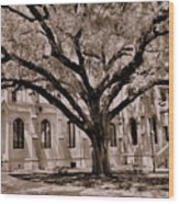 Trinity Episcopal Cathedral Court Yard Wood Print