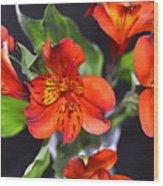 Trio Of Alstroemeria Inca Flowers-4 Wood Print
