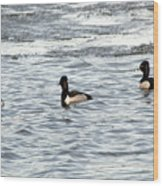 Trio Of Ducks Wood Print