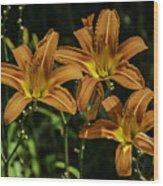 Trio Of Orange Tiger Lilies Wood Print