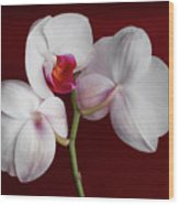 Trio Of Orchids Wood Print