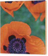 Trio Of Poppies Wood Print