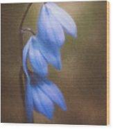 Trio Of Spring Flowers Wood Print