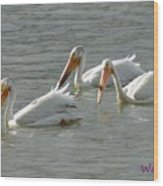 Trio Pelicans Wood Print