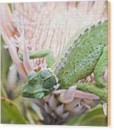 Trioceros Jacksonii - Jackson's Chameleon - Maui Hawaii Wood Print