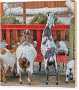 Trip Of Goats At Feeding Time Wood Print