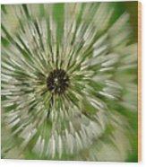 Triple Dandelion Wood Print