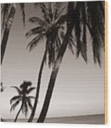 Triple Palms Wood Print