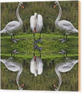 Triplets In Reflection Wood Print