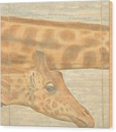 Triptych Giraffes General View Wood Print