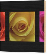 Triptych Roses Wood Print