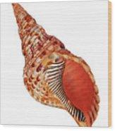 Triton Shell On White Vertical Wood Print