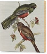 Trogon Collaris Wood Print by John Gould