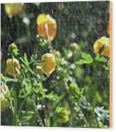 Trollius Europaeus Spring Flowers In The Rain Wood Print