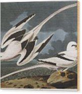 Tropic Bird Wood Print
