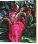 Anthurium Red Tropical Flower Wood Print