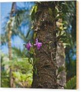 Tropical Beauty Wood Print