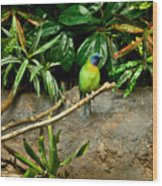 Tropical Bird 3 Wood Print