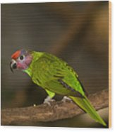 Tropical Bird Wood Print