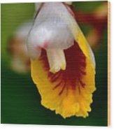Tropical Bloom 8 Wood Print