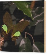 Tropical Buterfly Wood Print
