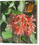 Tropical Butterfly On Flower Wood Print