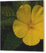 Tropical Dew Wood Print