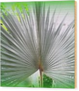 Tropical Fan Wood Print