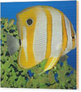 Tropical Fish Butterflyfish. Wood Print